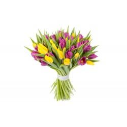 51 різнокольоровий тюльпан