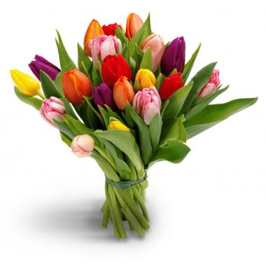Букет з 19 тюльпанів