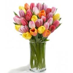 29 тюльпанів