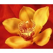 Авторські букети з Орхідеями