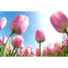 Авторські букети з Тюльпанами